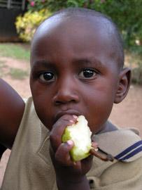 Fotoalbum von Malindi.info - Erste digitale Impressionen von Malindi 2003[ Foto 5 von 102 ]