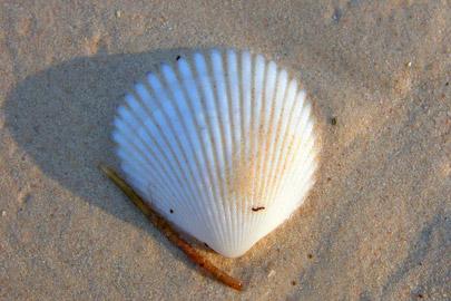 Fotoalbum von Malindi.info - Erste digitale Impressionen von Malindi 2003[ Foto 14 von 102 ]