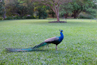 Fotoalbum von Malindi.info - Erste digitale Impressionen von Malindi 2003[ Foto 72 von 102 ]