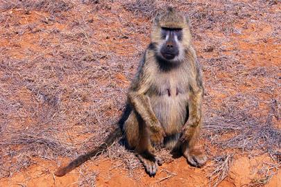 Fotoalbum von Malindi.info - Erste digitale Impressionen von Malindi 2003[ Foto 94 von 102 ]