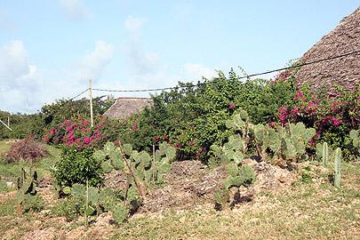 Fotoalbum von Malindi.info - Malindi-Impressionen von 2006[ Foto 46 von 83 ]