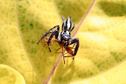 Fotoalbum von Malindi.info - Flora und Fauna Kenia 2006[ Foto 1 von 43 ]