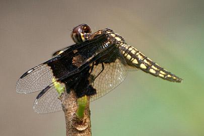 Fotoalbum von Malindi.info - Flora und Fauna Kenia 2006[ Foto 2 von 43 ]