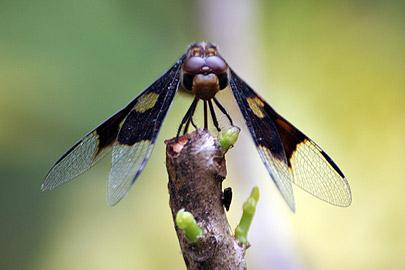 Fotoalbum von Malindi.info - Flora und Fauna Kenia 2006[ Foto 3 von 43 ]