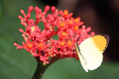 Fotoalbum von Malindi.info - Flora und Fauna Kenia 2006[ Foto 6 von 43 ]
