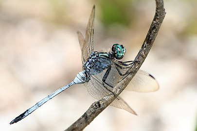 Fotoalbum von Malindi.info - Flora und Fauna Kenia 2006[ Foto 7 von 43 ]