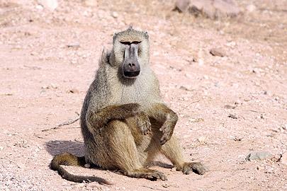 Fotoalbum von Malindi.info - Flora und Fauna Kenia 2006[ Foto 11 von 43 ]