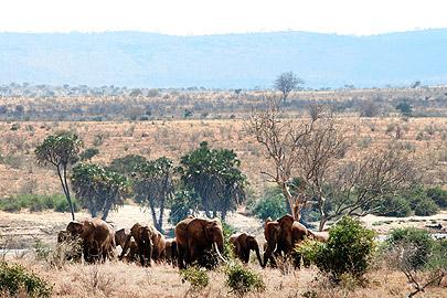 Fotoalbum von Malindi.info - Flora und Fauna Kenia 2006[ Foto 14 von 43 ]