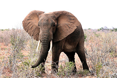 Fotoalbum von Malindi.info - Flora und Fauna Kenia 2006[ Foto 15 von 62 ]