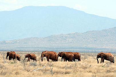 Fotoalbum von Malindi.info - Flora und Fauna Kenia 2006[ Foto 17 von 62 ]