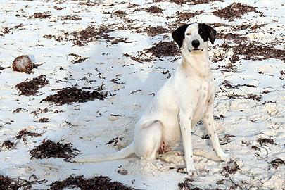 Fotoalbum von Malindi.info - Flora und Fauna Kenia 2006[ Foto 20 von 43 ]