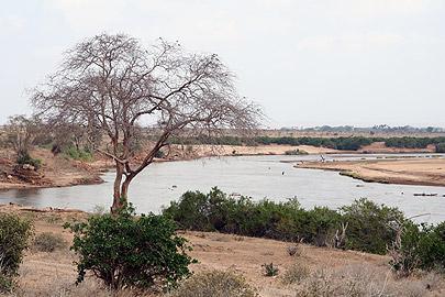 Fotoalbum von Malindi.info - Flora und Fauna Kenia 2006[ Foto 22 von 62 ]