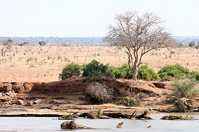 Fotoalbum von Malindi.info - Flora und Fauna Kenia 2006[ Foto 23 von 43 ]