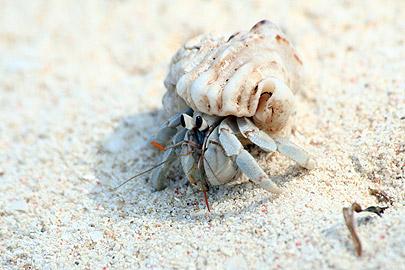 Fotoalbum von Malindi.info - Flora und Fauna Kenia 2006[ Foto 25 von 43 ]