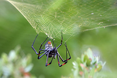 Fotoalbum von Malindi.info - Flora und Fauna Kenia 2006[ Foto 26 von 43 ]