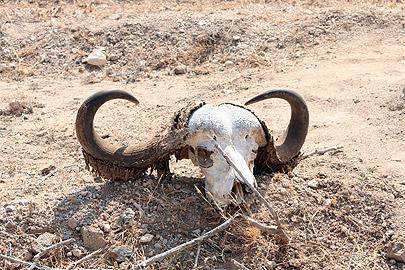 Fotoalbum von Malindi.info - Flora und Fauna Kenia 2006[ Foto 28 von 43 ]