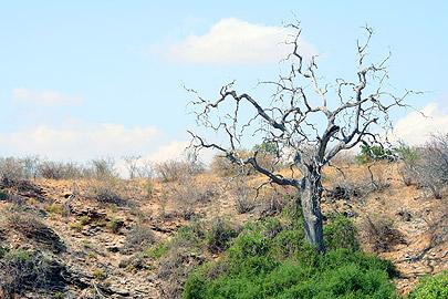 Fotoalbum von Malindi.info - Flora und Fauna Kenia 2006[ Foto 29 von 43 ]