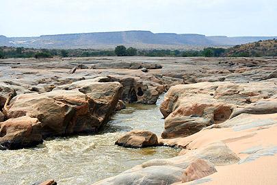 Fotoalbum von Malindi.info - Flora und Fauna Kenia 2006[ Foto 30 von 43 ]
