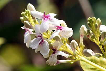 Fotoalbum von Malindi.info - Flora und Fauna Kenia 2006[ Foto 32 von 43 ]