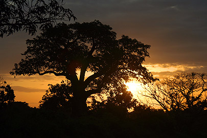 Fotoalbum von Malindi.info - Flora und Fauna Kenia 2006[ Foto 33 von 43 ]