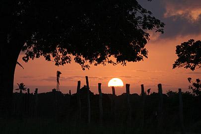 Fotoalbum von Malindi.info - Flora und Fauna Kenia 2006[ Foto 35 von 43 ]