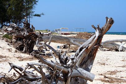 Fotoalbum von Malindi.info - Fotos von Malindi und Umgebung 2007[ Foto 22 von 90 ]