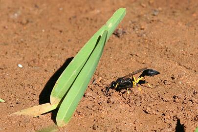 Fotoalbum von Malindi.info - Fotos von Malindi und Umgebung 2007[ Foto 41 von 90 ]