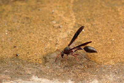 Fotoalbum von Malindi.info - Fotos von Malindi und Umgebung 2007[ Foto 49 von 90 ]