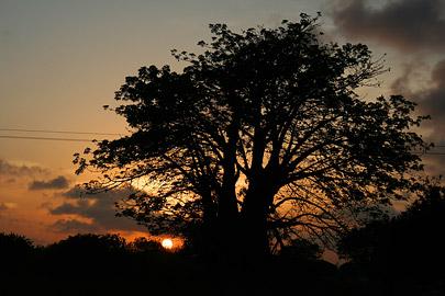 Fotoalbum von Malindi.info - Fotos von Malindi und Umgebung 2007[ Foto 70 von 90 ]
