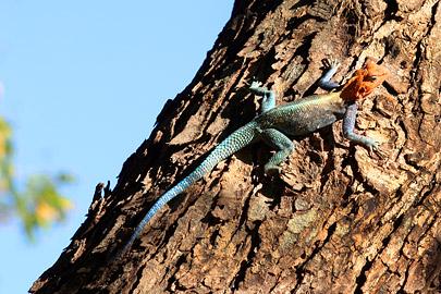 Fotoalbum von Malindi.info - Fotos von Malindi und Umgebung 2007[ Foto 74 von 90 ]