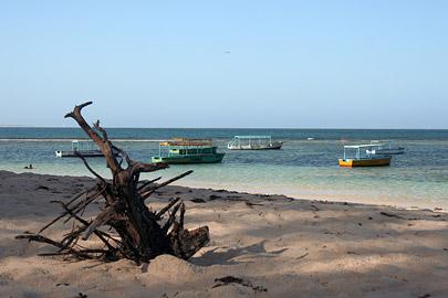 Fotoalbum von Malindi.info - Malindi Marine Park 2008[ Foto 6 von 63 ]
