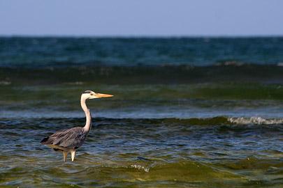 Fotoalbum von Malindi.info - Malindi Marine Park 2008[ Foto 10 von 63 ]