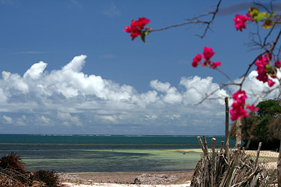 Fotoalbum von Malindi.info - Malindi Marine Park 2008[ Foto 23 von 63 ]
