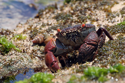 Fotoalbum von Malindi.info - Malindi Marine Park 2008[ Foto 53 von 63 ]