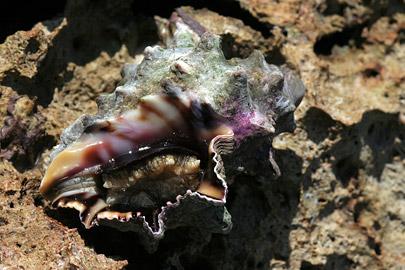 Fotoalbum von Malindi.info - Malindi Marine Park 2008[ Foto 56 von 63 ]