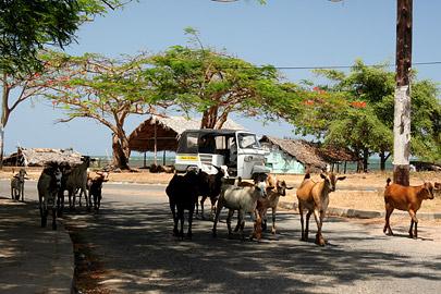 Fotoalbum von Malindi.info - Malindi Impressionen 2008[ Foto 35 von 99 ]