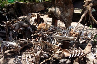 Fotoalbum von Malindi.info - Malindi Impressionen 2008[ Foto 39 von 99 ]