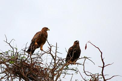 Fotoalbum von Malindi.info - Tsavo West/East Safari im März 2009[ Foto 3 von 140 ]