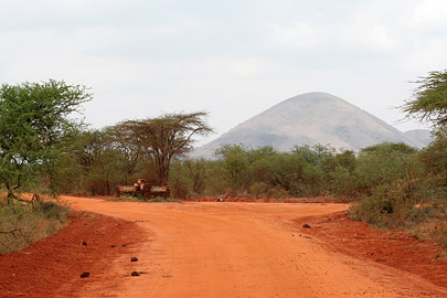 Fotoalbum von Malindi.info - Tsavo West/East Safari im März 2009[ Foto 9 von 140 ]