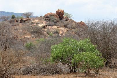 Fotoalbum von Malindi.info - Tsavo West/East Safari im März 2009[ Foto 10 von 140 ]