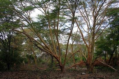 Fotoalbum von Malindi.info - Tsavo West/East Safari im März 2009[ Foto 12 von 140 ]