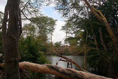 Fotoalbum von Malindi.info - Tsavo West/East Safari im März 2009[ Foto 15 von 140 ]