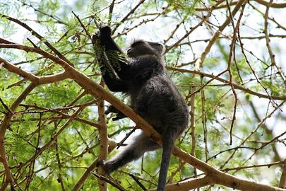 Fotoalbum von Malindi.info - Tsavo West/East Safari im März 2009[ Foto 17 von 140 ]