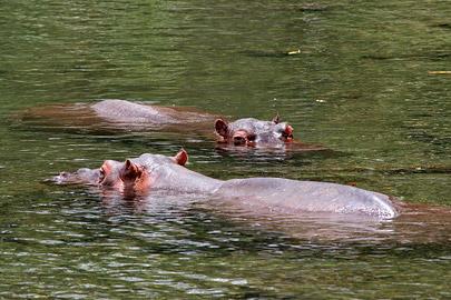 Fotoalbum von Malindi.info - Tsavo West/East Safari im März 2009[ Foto 19 von 140 ]