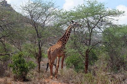 Fotoalbum von Malindi.info - Tsavo West/East Safari im März 2009[ Foto 27 von 140 ]