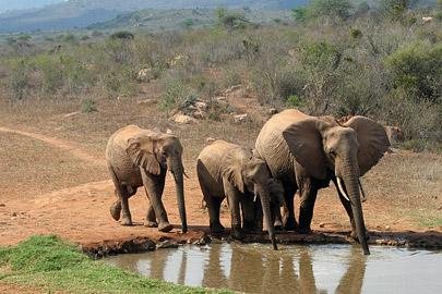 Fotoalbum von Malindi.info - Tsavo West/East Safari im März 2009[ Foto 29 von 140 ]