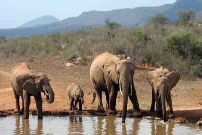 Fotoalbum von Malindi.info - Tsavo West/East Safari im März 2009[ Foto 30 von 140 ]