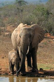 Fotoalbum von Malindi.info - Tsavo West/East Safari im März 2009[ Foto 32 von 140 ]