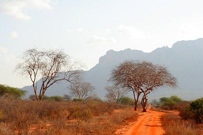 Fotoalbum von Malindi.info - Tsavo West/East Safari im März 2009[ Foto 38 von 140 ]