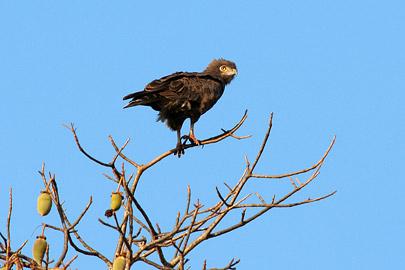 Fotoalbum von Malindi.info - Tsavo West/East Safari im März 2009[ Foto 39 von 140 ]